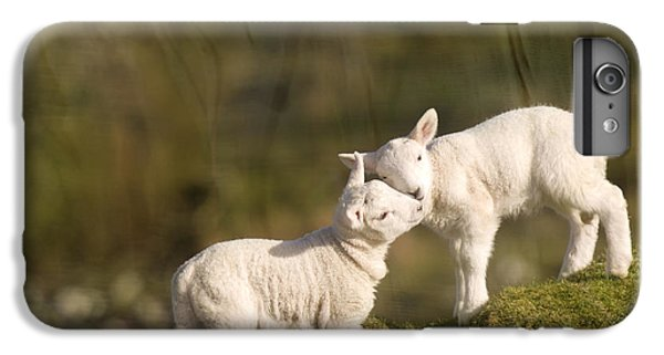 Sheep iPhone 6 Plus Case - Sweet Little Lambs by Angel Ciesniarska