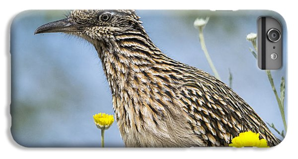The Greater Roadrunner  IPhone 6 Plus Case