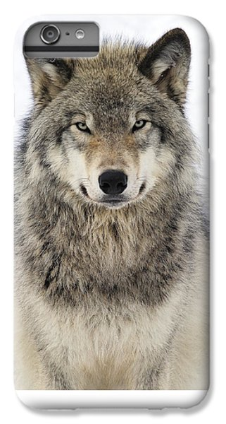 Timber Wolf Portrait IPhone 6 Plus Case