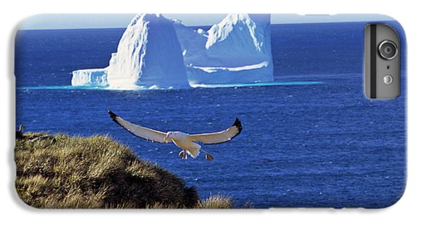 Wandering Albatross (diomendea Exulans IPhone 6 Plus Case by Martin Zwick