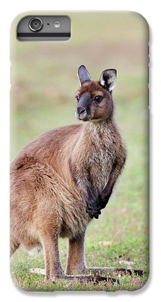 Western Grey Kangaroo (macropus IPhone 6 Plus Case by Martin Zwick