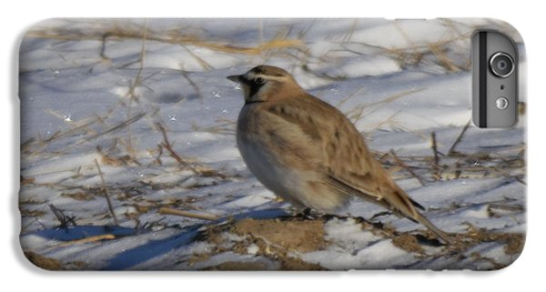Winter Bird IPhone 6 Plus Case