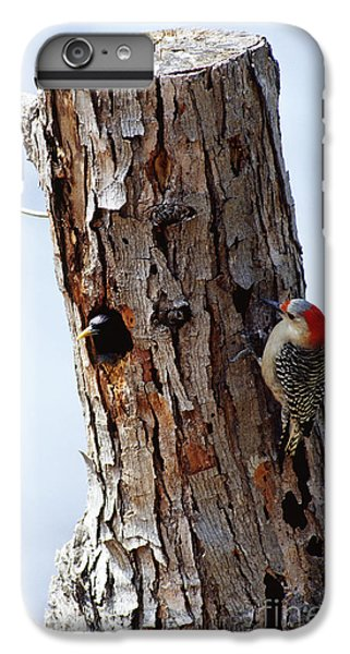 Woodpecker And Starling Fight For Nest IPhone 6 Plus Case by Gregory G. Dimijian
