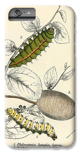 Butterflies IPhone 6 Plus Case by English School