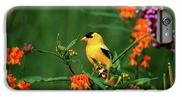 Canary iPhone 6 Plus Case - American Goldfinch (carduelis Tristis by Richard and Susan Day