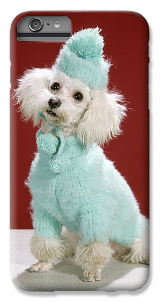 Knit Hat iPhone 6 Plus Case - 1970s White Poodle Wearing Blue Sweater by Animal Images