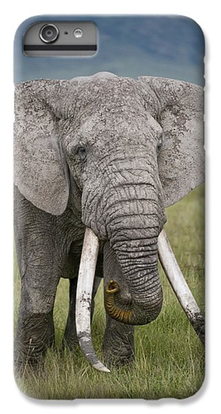 African Elephant Loxodonta Africana IPhone 6 Plus Case