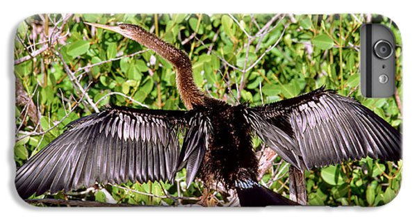 Anhinga Anhinga Anhinga Drying Plumage IPhone 6 Plus Case