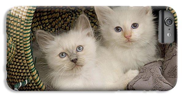 Birman iPhone 6 Plus Case - Birman Kittens by Jean-Michel Labat