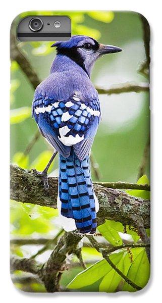 Bluejay IPhone 6 Plus Case by Ricky L Jones