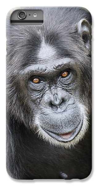 Chimpanzee Portrait Ol Pejeta IPhone 6 Plus Case by Hiroya Minakuchi
