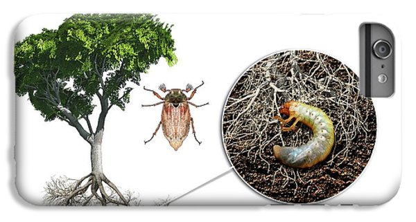 Cockchafer And Beech Tree IPhone 6 Plus Case