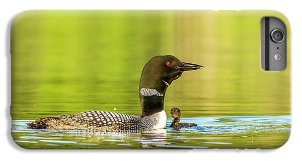 Loon iPhone 6 Plus Case - Female Common Loon With Newborn Chick by Chuck Haney