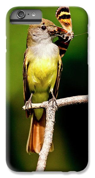 Flycatcher iPhone 6 Plus Case - Great Crested Flycatcher Myiarchus by David Northcott