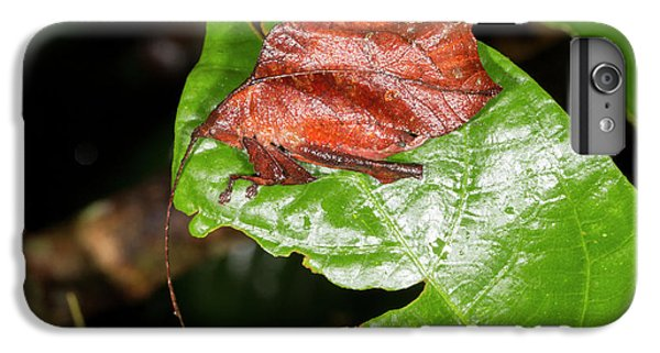 Leaf Mimic Katydid IPhone 6 Plus Case by Dr Morley Read