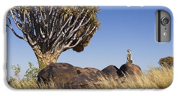 Meerkat iPhone 6 Plus Case - Meerkat In Quiver Tree Grassland by Vincent Grafhorst