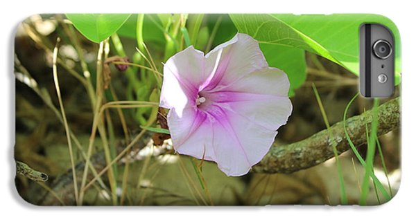 Sunny iPhone 6 Plus Case - Purple Flower by Michael Kim