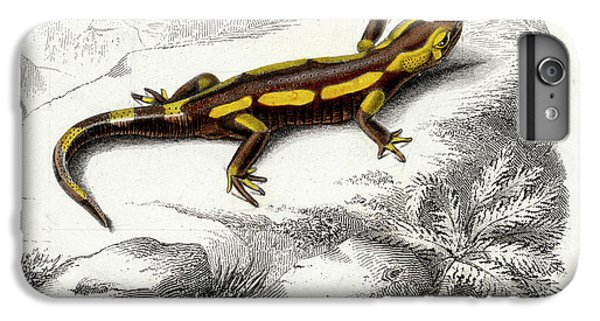 Salamanders iPhone 6 Plus Case - Salamander by Collection Abecasis