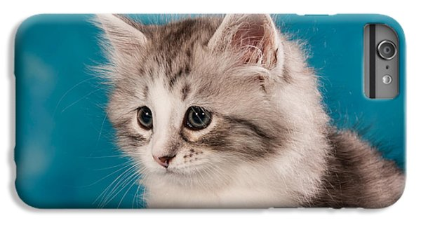 Cat iPhone 6 Plus Case - Sibirian Cat Kitten by Doreen Zorn
