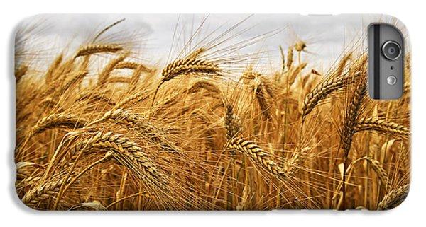 Rural Scenes iPhone 6 Plus Case - Wheat by Elena Elisseeva