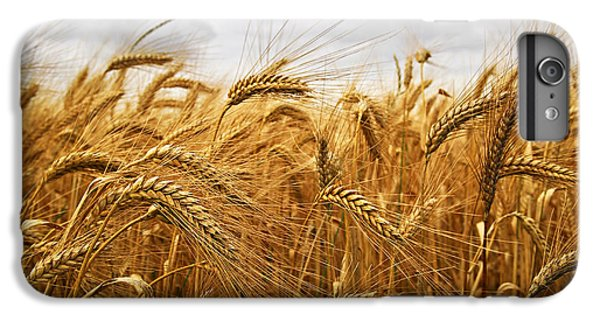 Wheat IPhone 6 Plus Case by Elena Elisseeva