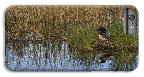 Common Loon Gavia Immer, Canada IPhone 6 Plus Case by John Shaw