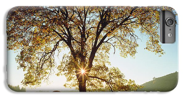 Scenic iPhone 6 Plus Case - Usa, California, San Diego by Jaynes Gallery