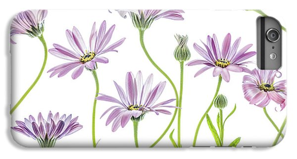 Daisy iPhone 6 Plus Case - Cape Daisies by Mandy Disher