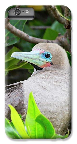 Boobies iPhone 6 Plus Case - Ecuador, Galapagos Islands, Genovesa by Ellen Goff