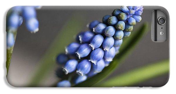 Grape Hyacinth IPhone 6 Plus Case by Nailia Schwarz