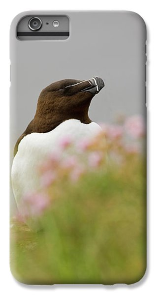 Iceland, Latrabjarg IPhone 6 Plus Case by Jaynes Gallery