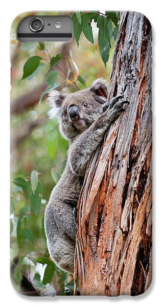 Koala (phascolarctos Cinereus IPhone 6 Plus Case by Martin Zwick