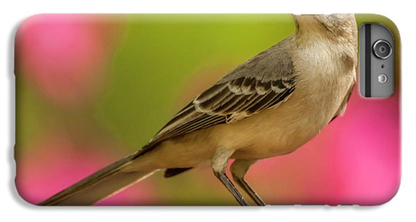 Mockingbird iPhone 6 Plus Case - Usa, North Carolina, Guilford County by Jaynes Gallery