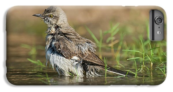 Mockingbird iPhone 6 Plus Case - Usa, Texas, Starr County by Jaynes Gallery