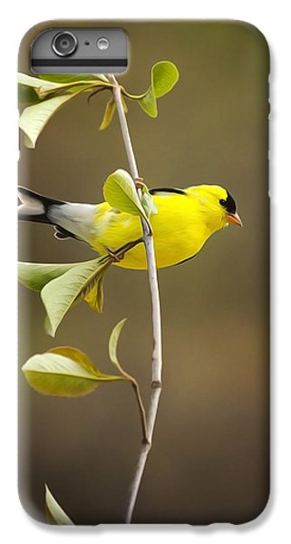 American Goldfinch IPhone 6 Plus Case