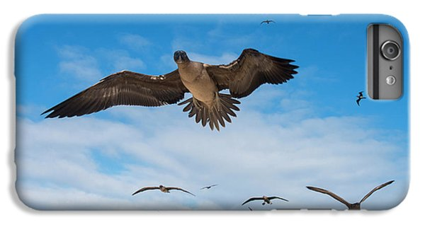 Boobies iPhone 6 Plus Case - Red-footed Booby (sula Sula Websteri by Pete Oxford