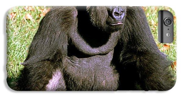 Adult Male Western Lowland Gorilla IPhone 6 Plus Case