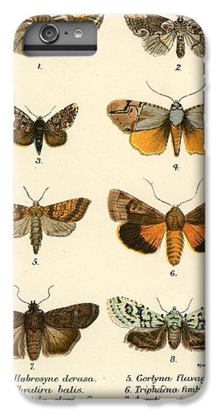 Butterfly iPhone 6 Plus Case - Butterflies by English School