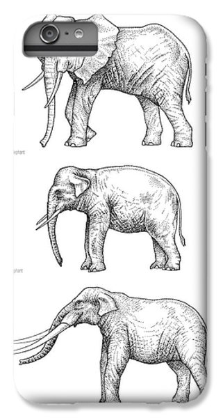 Elephant Evolution, Artwork IPhone 6 Plus Case by Gary Hincks