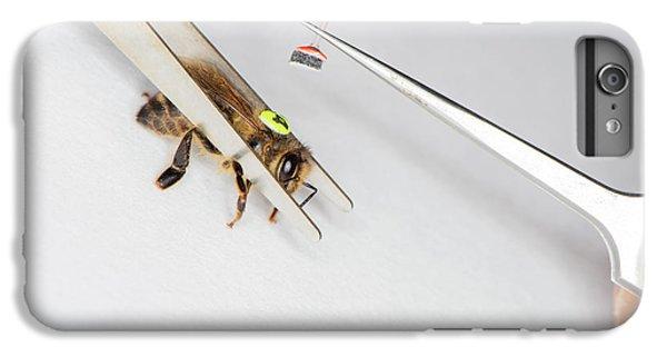 Honeybee iPhone 6 Plus Case - Honeybee Radar Tagging by Louise Murray