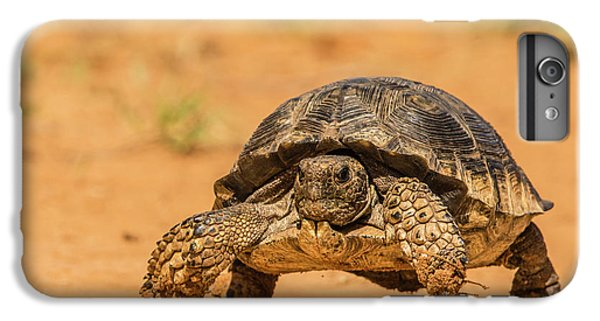 Tortoise iPhone 6 Plus Case - Usa, Texas, Hidalgo County by Jaynes Gallery