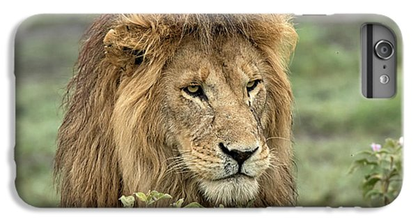 Lion Head iPhone 6 Plus Case - Africa, Tanzania, Serengeti by Charles Sleicher