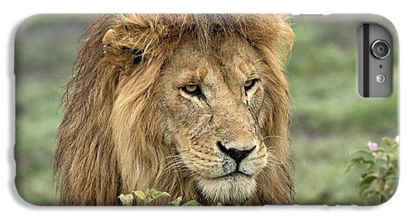 Africa, Tanzania, Serengeti IPhone 6 Plus Case