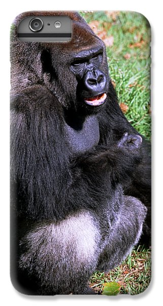 Silverback Western Lowland Gorilla IPhone 6 Plus Case