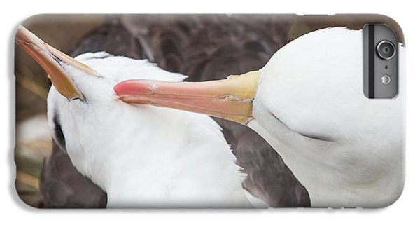A Black Browed Albatross IPhone 6 Plus Case by Ashley Cooper