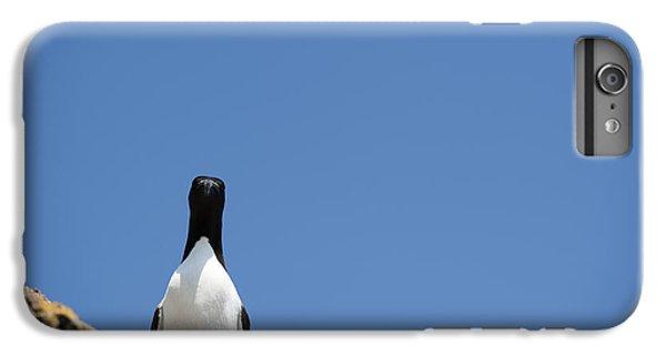 A Curious Bird IPhone 6 Plus Case by Anne Gilbert