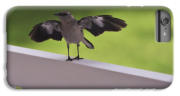 A Little Visitor Northern Mockingbird IPhone 6 Plus Case by Terry DeLuco