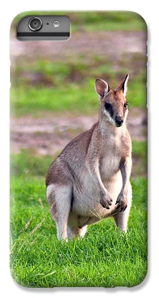 A Male Grey Kangaroos (macropus IPhone 6 Plus Case by Miva Stock