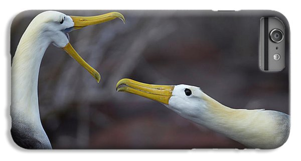 Albatross iPhone 6 Plus Case - A Wave Albatross Couple In A Courtship by Peter Essick