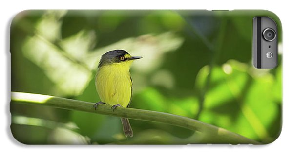 Flycatcher iPhone 6 Plus Case - A Yellow-lored Tody Flycatcher by Alex Saberi